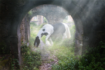 Gypsy Vanner in Castle Ruins by Red-Poet
