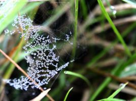 dew by Sangvinar