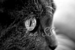 Kitteh by SSPictures