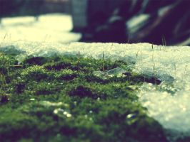 Moss by gendosplace
