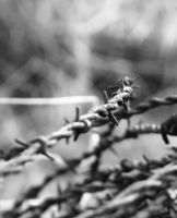 Barbwire by Foxtography