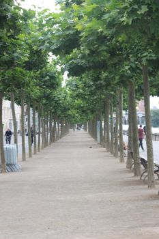 Avenue of Trees by TheSoullessRedbeard