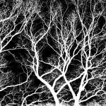 boughs by augenweide