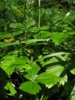 green nature - stock by stock-of-aestchen