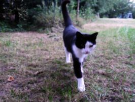 Come on Kitty Cat by Driif