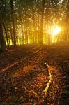 Rays Of Fall by MarcoHeisler