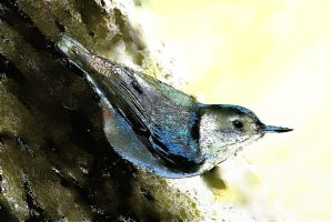 Nuthatch for the New Year by Foxytocin
