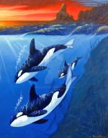 Killer Whales by WildartBD