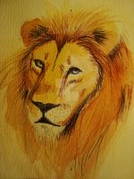 Lion by JohnAnna