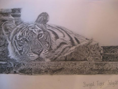 Bengal Tigerr by SamAnneLester