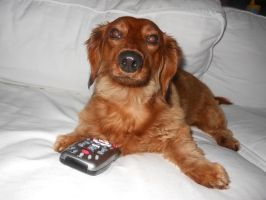 My Remote!!! by willow1894
