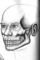 Anatomical study : fleshed 2 by northdrow
