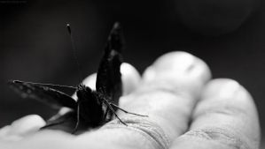 Drunk Butterfly by nostro-fr