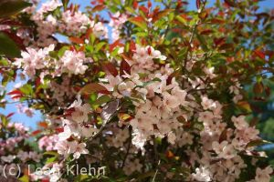 Spring is Here by Through-the-Lens234