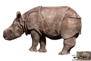 Cut-out stock PNG 87 - baby rhinoceros by Momotte2stocks