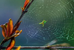 Green Spider by WTek79