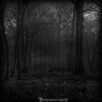 In the dark forest VI by CountessBloody