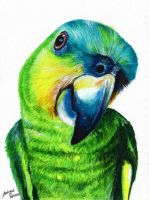 Parrot by Andrew-Willson