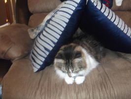 my cat in pillow fort by michelous