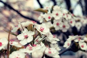 remember.spring by sarah-marley