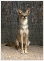 At Full Attention by skydragondancer