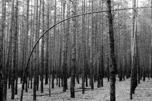 Forest geometry 2 by Franny-Winter