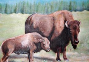 Buffalo Oil Painting by Spilled-Sunlight