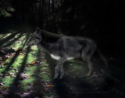 Nymeria for Castle by wolfsbane554