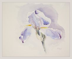 Pale Iris by ColourWheel