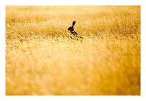Fields Of Gold by GVA