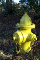 Sunny Fire Hydrant in yellow by paintresseye