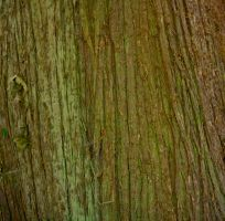 Texture Stock 2 by Moonchilde-Stock