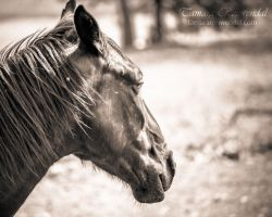 Horse by TammyPhotography