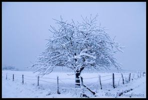 Snowy Tree by allym007