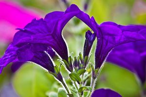 Road Trip Floral Macros 8 by Witch-Dr-Tim