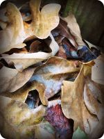 leaves in the fall by x--photographygirl