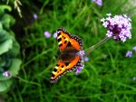 Butterfly by jaga20