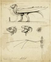 Pseudodraco praevalidus - notes and sketches by FabrizioDeRossi