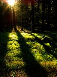 Mossy forest by THEsimplePLEASURES
