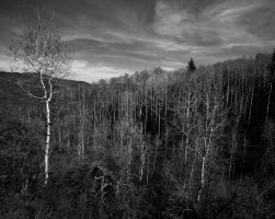 Uinta National Forest Number 1234 by JeanLuc44