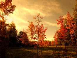 Fall moods by KariLiimatainen
