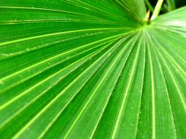 Fronds Of Summer by techunit