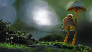 Two snails atop a mushroom by BalochDesign