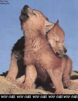 Wolf Pups by howiling-pain