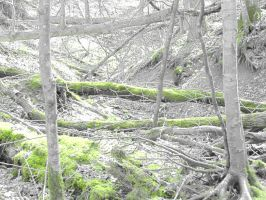 Fallen Trees Filtered by parkins73