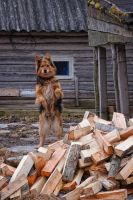 Dont Touch. Its my fire wood. by xrust