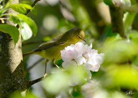 Immature Orange-crowned Warbler by AzureWindProductions