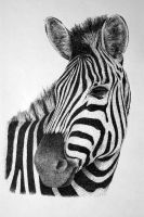 Zebra by Rens-Ink