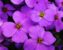 Purple Medley by andras120