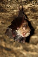 Mom bat and Baby bat by Galendae